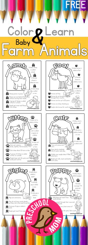 Color and Learn Baby Farm Animals!  Includes Footprints and exciting facts for children.  Great for your preschool/kindergarten.  Spring, Farm unit studies. http://preschoolmom.com/farm-preschool-printables/baby-farm-animal-color-learn/