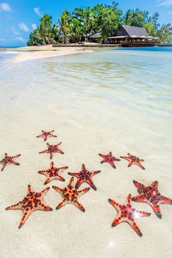 Erakor Island starfish party, Port Vila, Vanuatu by Alex James - Photo 134804241 - 500px