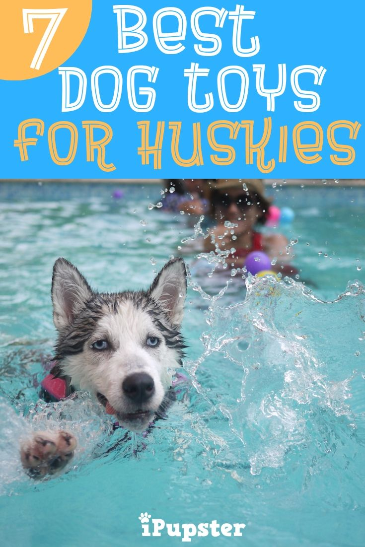Best 7 Chew Dog Toys For Siberian Huskies That Ll Save Your Shoes