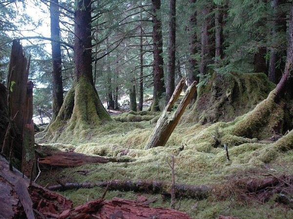 Photos that other people have posted from Haida Gwaii