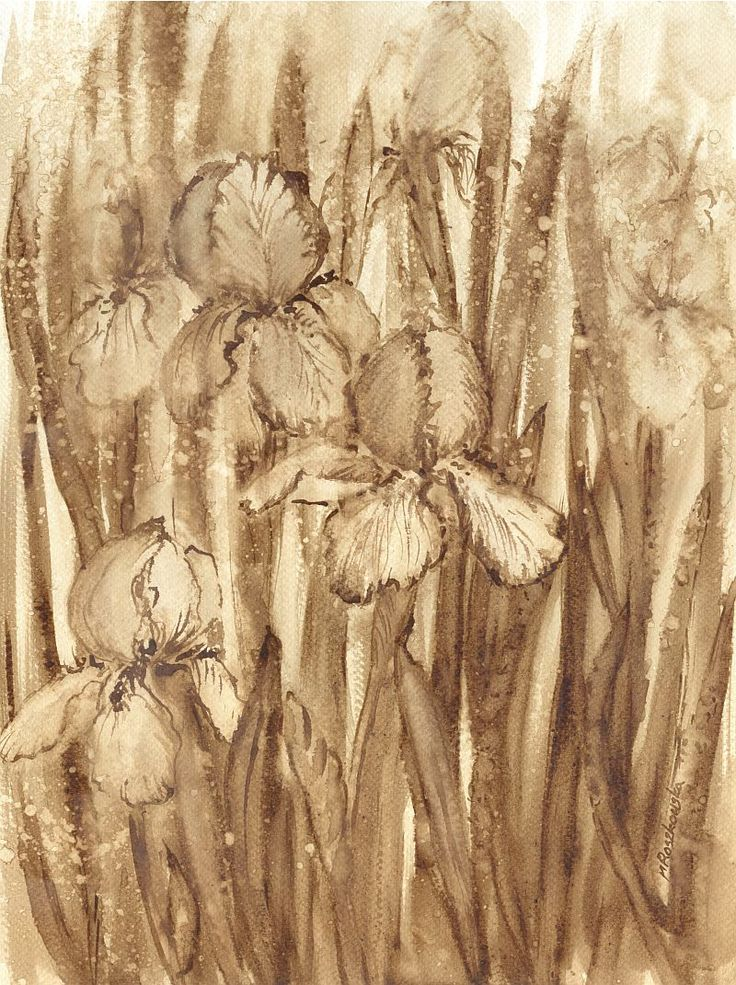 Irysy - watercolour painted with coffee - Maria Roszkowska