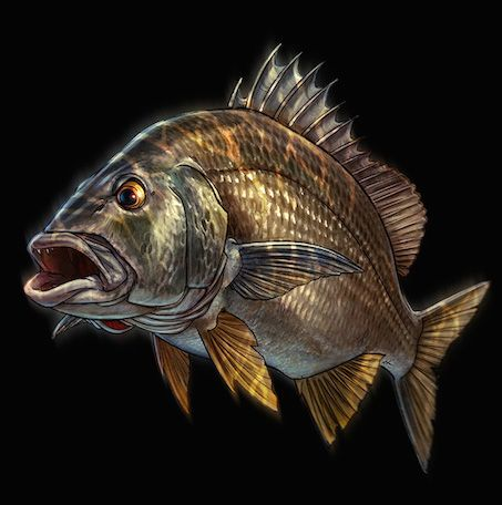 17 best images about fish art on pinterest fish for Bass fishing art