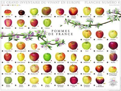10 best images about apple varietiescultivars on