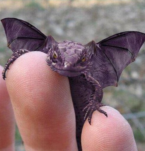 dragon - really is this little purple guy real? cutie
