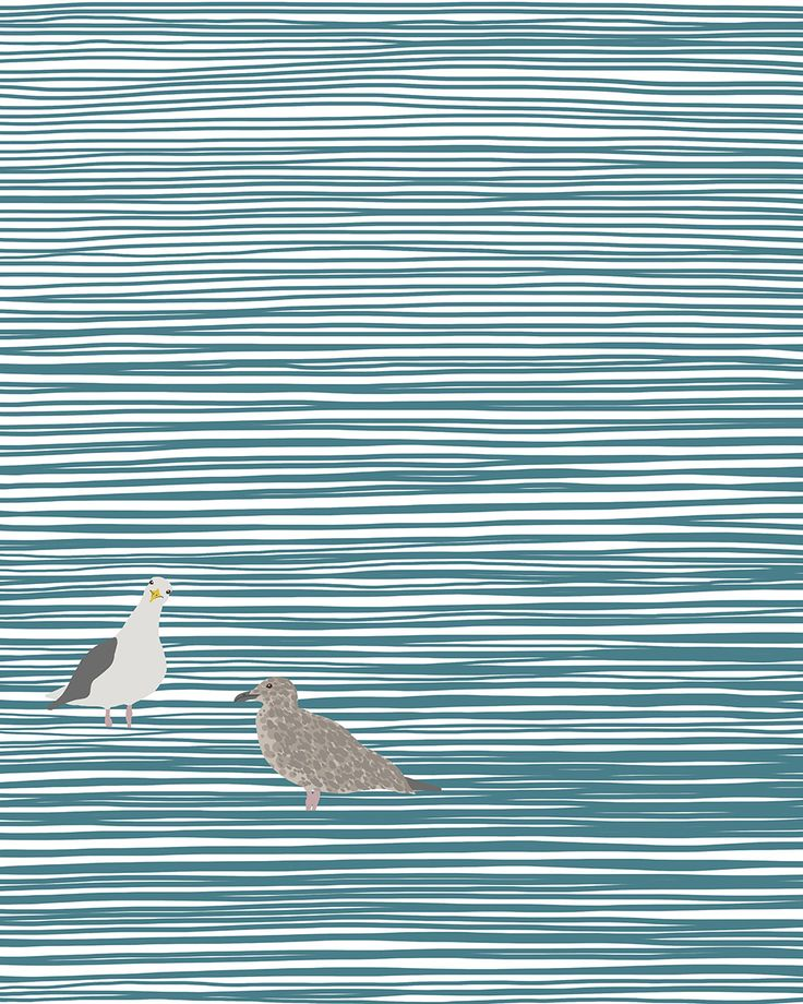 Seagulls wading (adult and youngster).