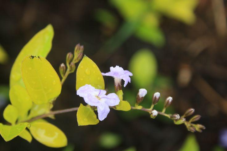 El nacimiento de las flores cotidianas en nuestra tierra