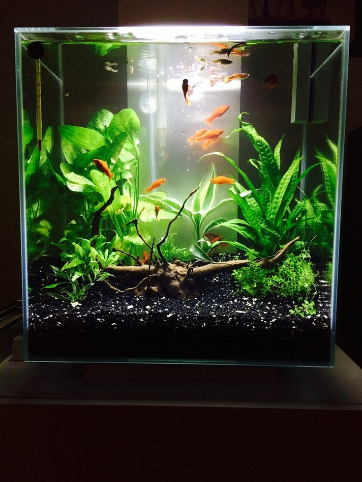 105 best images about fluval edge inspiration on pinterest for Fluval fish tank