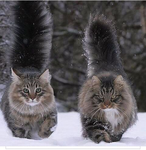 Okay listen, if I ever got a cat I'm gonna need it to be One of these mfrs