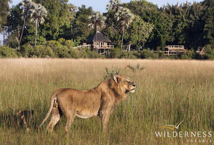 Tubu Tree Camp - In the dry season lechwe, tsessebe, elephant, wildebeest and zebra are prevalent, with lion, cheetah and leopard often sighted. #Safari #Africa #Botswana #WildernessSafaris