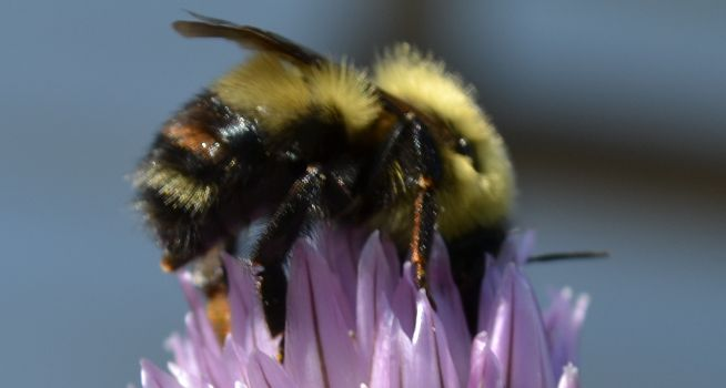 Helping the Bees in Your Garden - Frankie Flowers