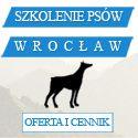 http://www.szkola-doberman.pl/szkolenie-psow-wroclaw/ szkolenie psów we wrocławiu, szkoła szkolenia psów - zapisy, informacje, cennik szkolenia psa