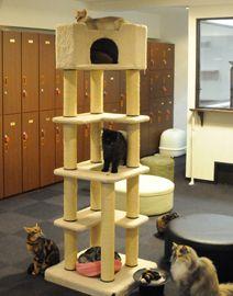 猫カフェ きゃりこ RENT A CAT FOR A DAY!