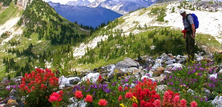Vernon Outdoor Club Hike |  Scenery and wildflowers abound in the hills and mountains surrounding Vernon