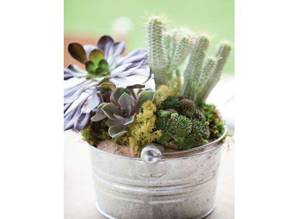 Centro de mesa para boda con cactus en base de cubeta