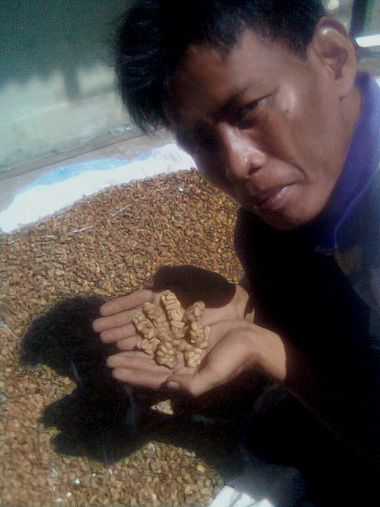 80 Cup Of Coffee: Kopi Luwak Beans Pooped By Palm Civets In Indonesia   The world's most expensive coffee can cost $80 a cup, and scientists now are reporting development of the first way to verify authenticity of this crème de la crème, the beans of which come from the feces of a Southeast Asian animal called a palm civet. Their study appears in ACS' Journal of Agricultural and Food Chemistry.