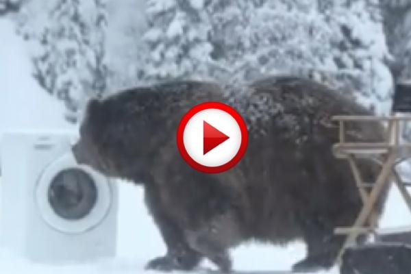 bear in the woods lol