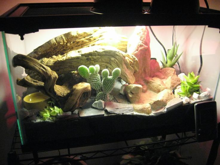 gecko terrarium 20 gallon desert vivarium leopard gecko leopard gecko pinterest home. Black Bedroom Furniture Sets. Home Design Ideas