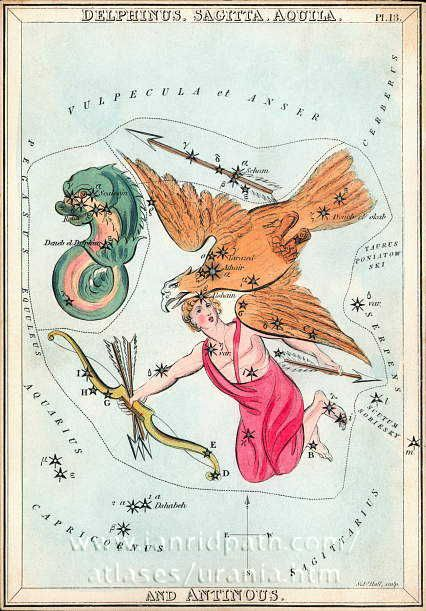 Card 13 Dephinus, Sagitta, Aquila and Antinous - Urania's Mirror