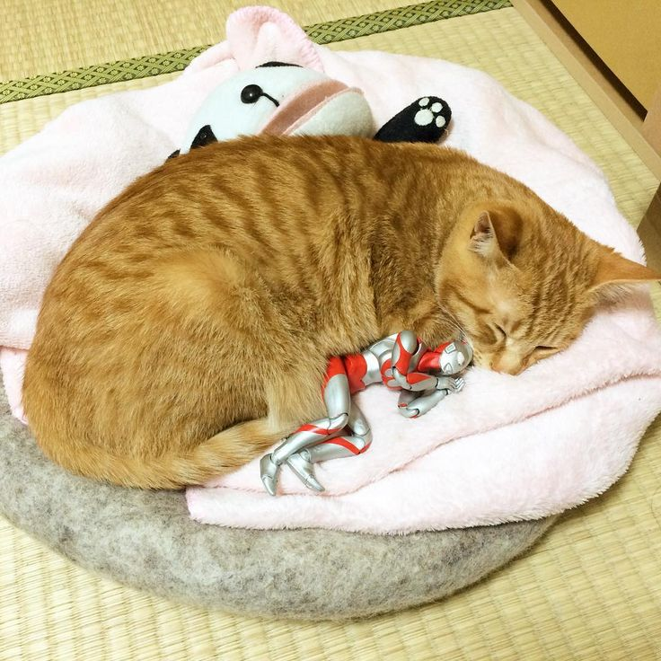 みんなで寝。 #猫 #子猫 #茶トラ #cat #kitten