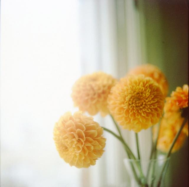 Flor: Arrangements Ideas, Yellow Flowers, Romantic Wedding, Cinnamon, Wedding Ideas, Flowers Arrangements, Cloud, Floral Arrangements, Yellow Dahlias