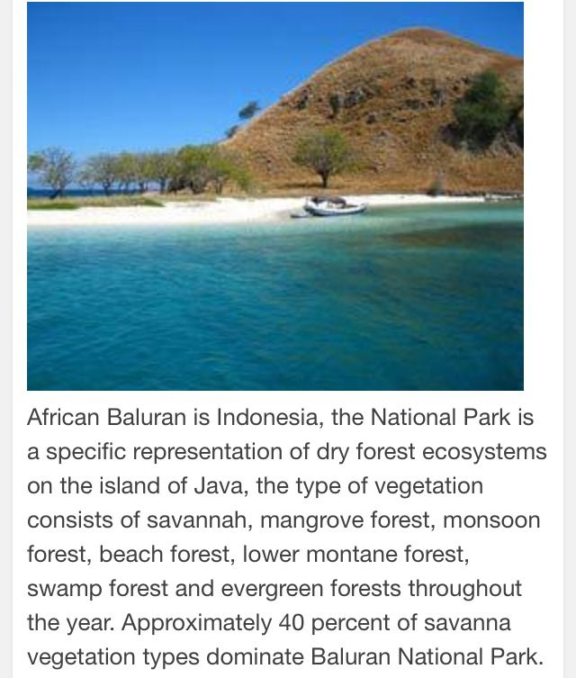 Baluran-East Java Indonesia.