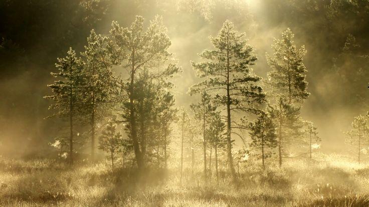 Valon puut.