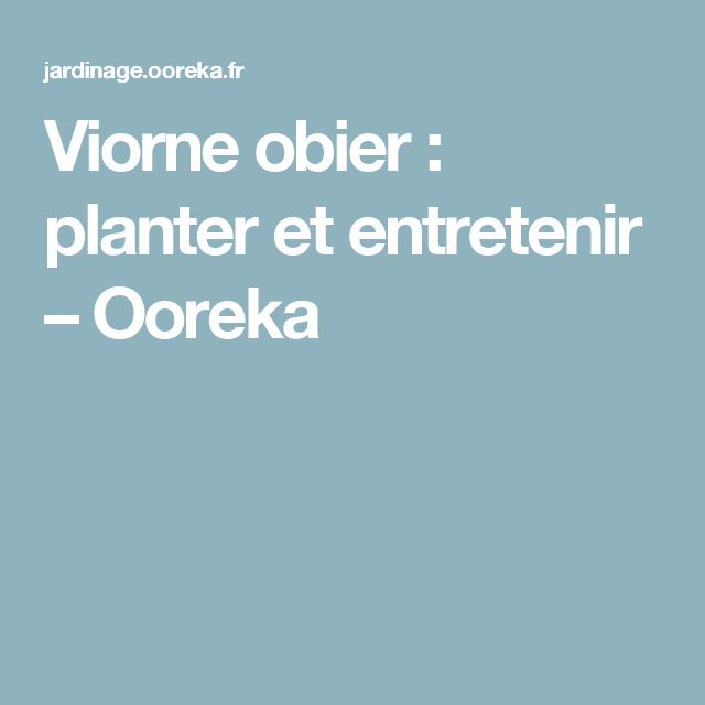 Viorne obier: planter et entretenir – Ooreka