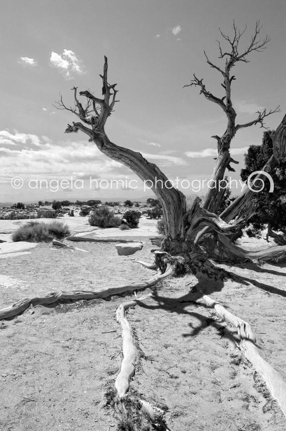 Desert Stretch - Juniper Tree in Moab Desert