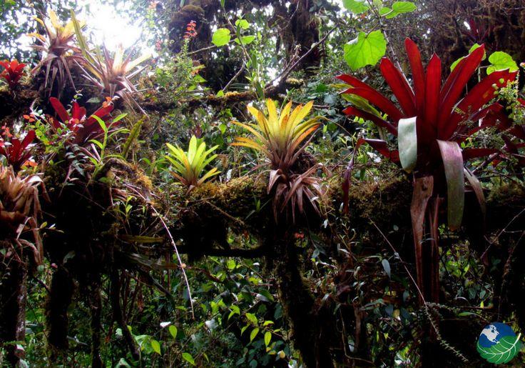 La Amistad International Park Epiphytes