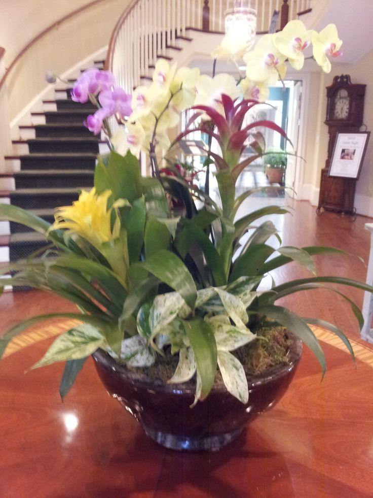 18 best Interior plants images on Pinterest   Interior plants ...
