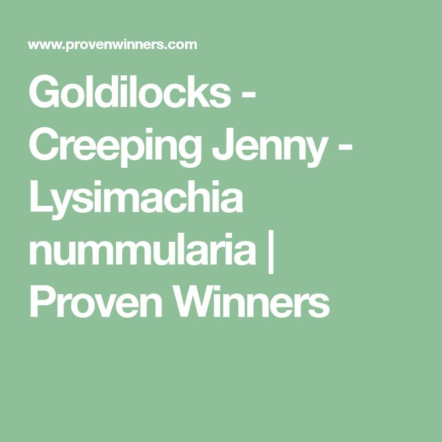 Goldilocks - Creeping Jenny - Lysimachia nummularia | Proven Winners