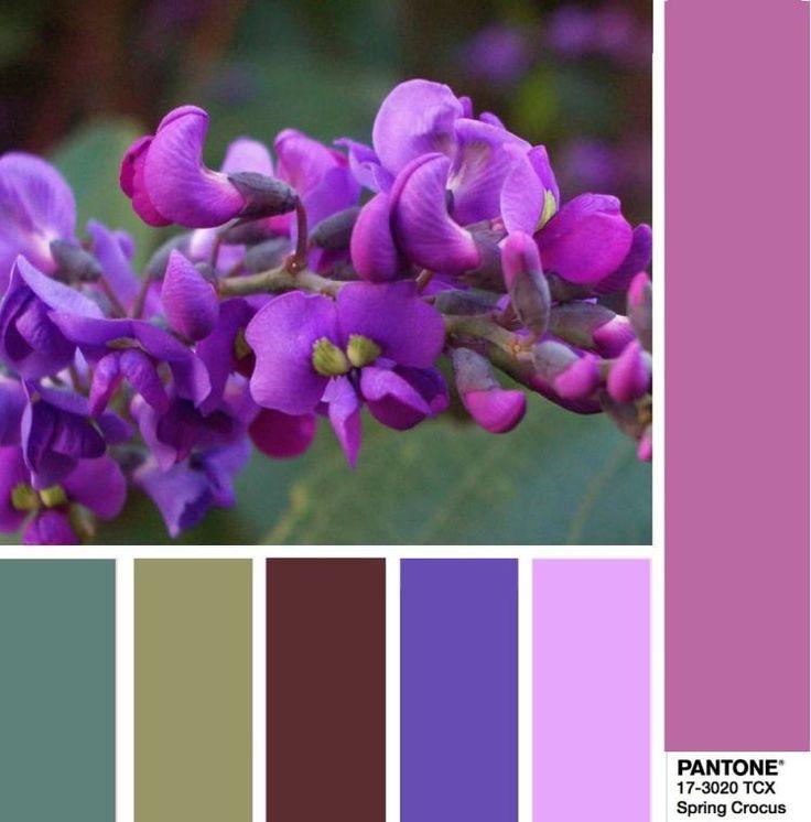 PANTONE 17-3020 Spring Crocus - Весенний крокус