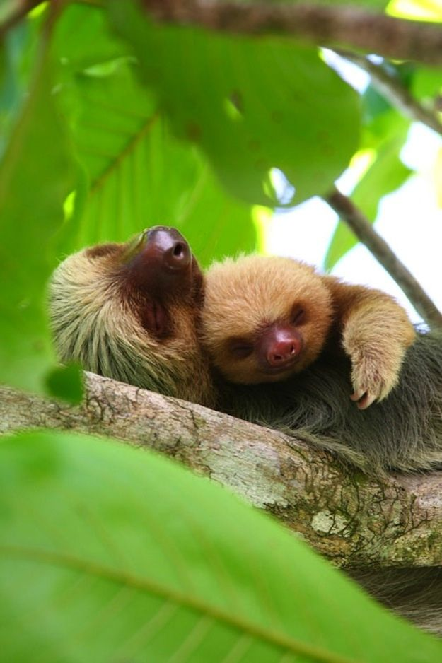 24 Photos Of Animals That Know What Love Is                       I love a sloth, 2 is even better