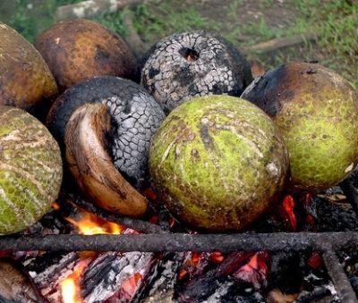 La Cuisine tahitienne On consomme le uru en accompagnement avec le ma'a tahiti, le punu pua'a toro.. Le uru est traditionnellement cuit directement sur le feu. C'est la méthode la plus courante. Autre méthode, Vous pouvez directement posé votre uru sur un brûleur à gaz afin de le cuire rapidement. petit conseil : plus il est mûr (mou au touché) et plus il sera sucré, attention à ne pas le prendre complètement mou sinon il ne sera pas bon.