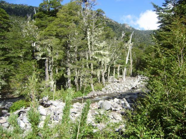 bosque sur de chile