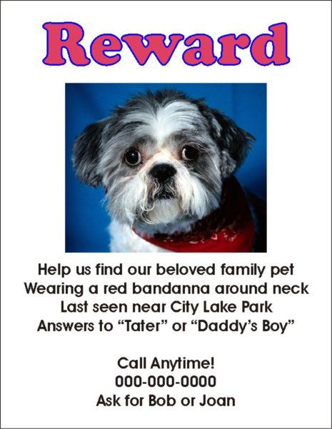 flyers for missing pets in texas whith a reward