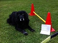Easy Dogs / Easy Dogs Trainingstagebuch Longieren, Rezension von Bettina Patzina