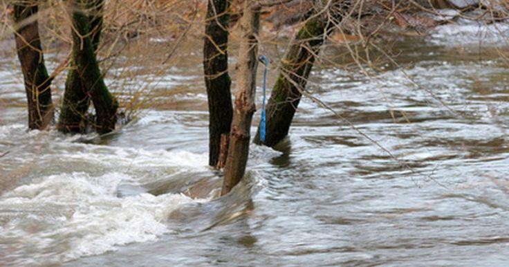 Quais são as consequências de uma enchente?. Aumentando em frequência devido aos efeitos ambientais do El Niño e ao rápido desmatamento, as enchentes agora são responsáveis por 40% de todos os desastres naturais no mundo, de acordo com um relatório preparado pela Oracle Thinkquest. Embora o início de uma enchente possa ocorrer em questão de minutos, as consequências ambientais e sociais ...