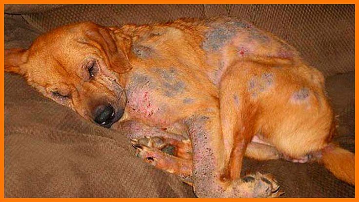 лечение лишая у собаки