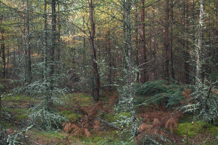 https://flic.kr/p/M812Uz   forest, autumn, colors