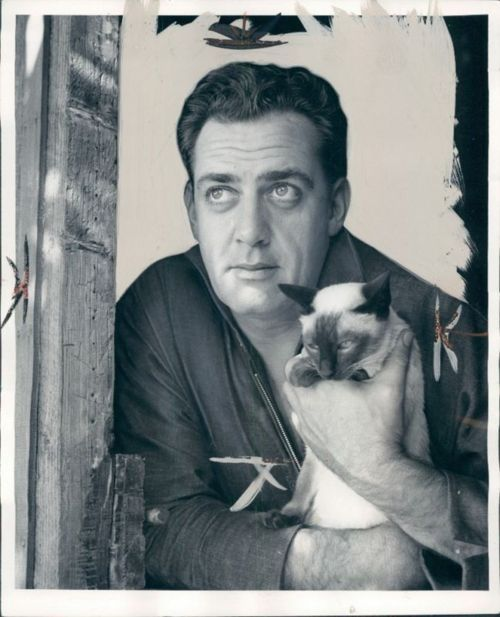 Raymond Burr with his Siamese cat circa 1960s