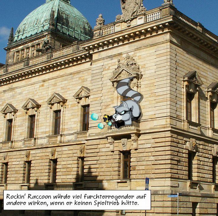 Rockin' Raccoon am Bundesverwaltungsgericht   #Leipzig #raccoon #Spieltrieb #Waschbär