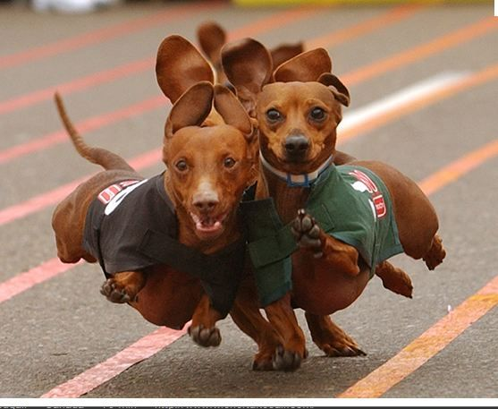 For some of my dear friends.....Weiners!!!!!