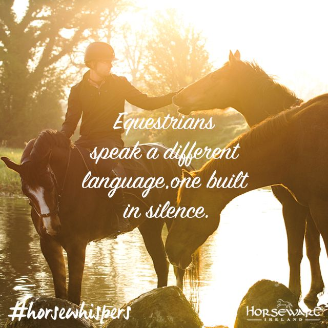 Tuesday #truth from our #horsewhispers. #horseware #rugsforlife #inspiration #silence #goodforthesoul #horse #equestrianlife