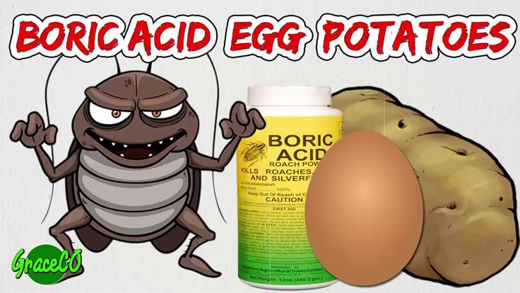 How To Get Rid of Cockroaches With Boric Acid | Best Way Get Rid Roaches...