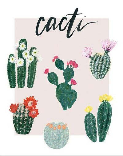 Best ideas about cactus illustration on pinterest