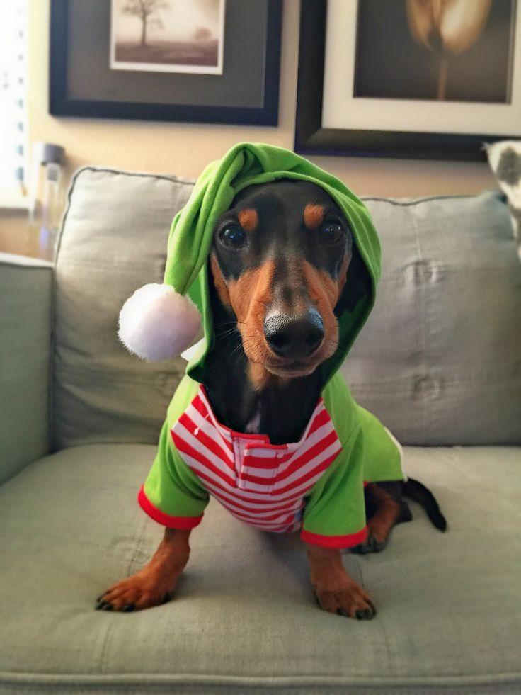Best 25 Dachshund Clothes Ideas On Pinterest Sausage