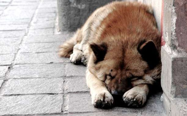 Όταν ένα Pet Shop χαρίζει ζώα από καταφύγια