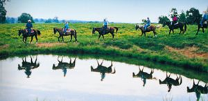 With rolling hills and mountains and flowing river valleys, it's no wonder Missouri is full of beautiful horseback riding opportunities. If you can do it outdoors, you can do it in Missouri. Containing hundreds of conservation and natural areas, 52 state parks, the vast Mark Twain National Forest, the Ozark National Scenic Riverways, the 240-mile Katy Trail (America's longest rail-to-trail hiking/biking trail) and thousands of hunting and fishing spots to catch any type of wildlife, Missouri…