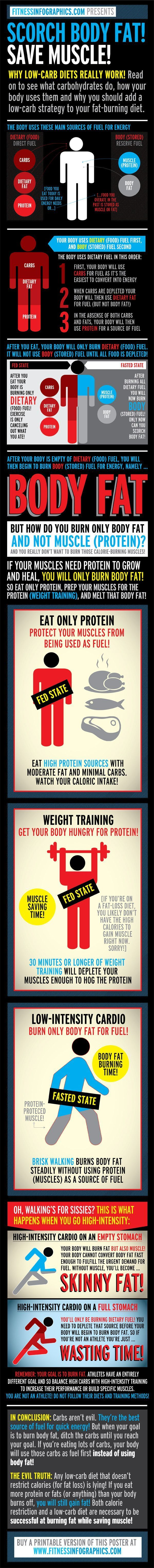 How the body uses different sources of fuel, both dietary (proteins, carbs, fats) and stored (body fat, muscle).: